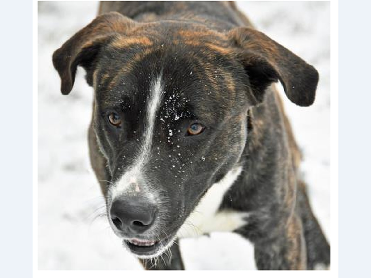 Cleveland APL Pet of the Week: Bullet Bill is a cool customer