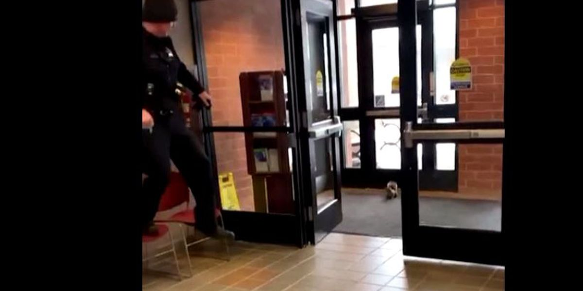 A squirrel walks into a police station, that's when things get hilarious (video)