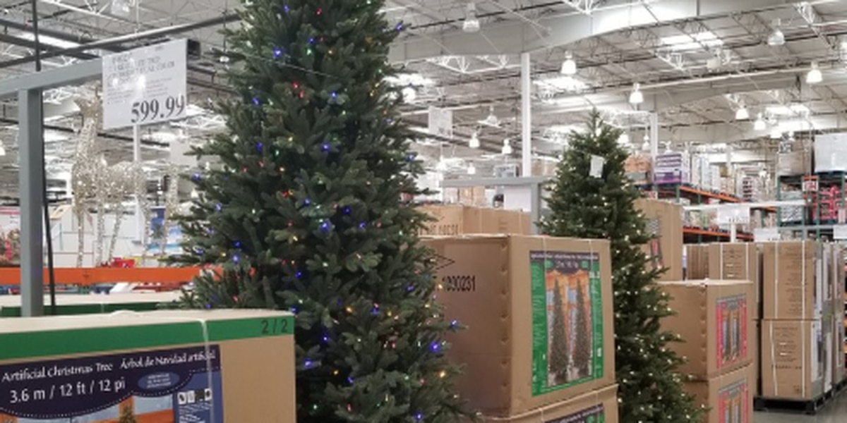Avon Costco Has Already Started Selling Christmas Trees
