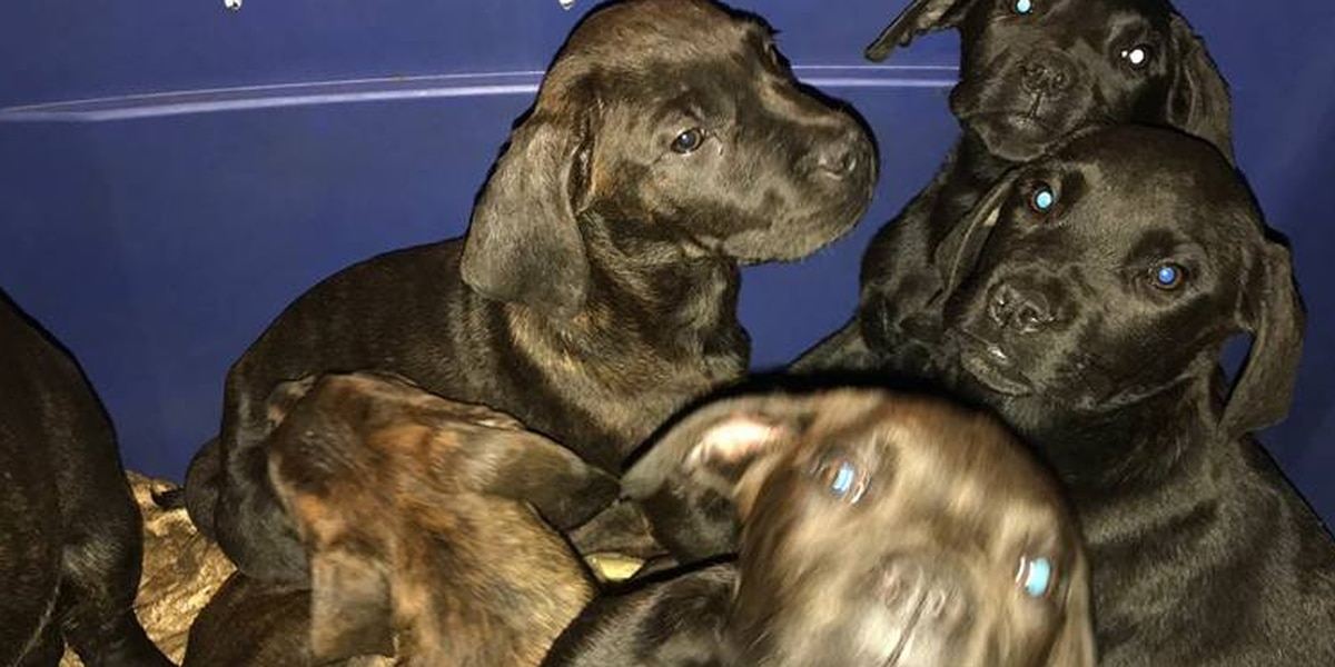 9 puppies found crammed in plastic boxes in Streetsboro
