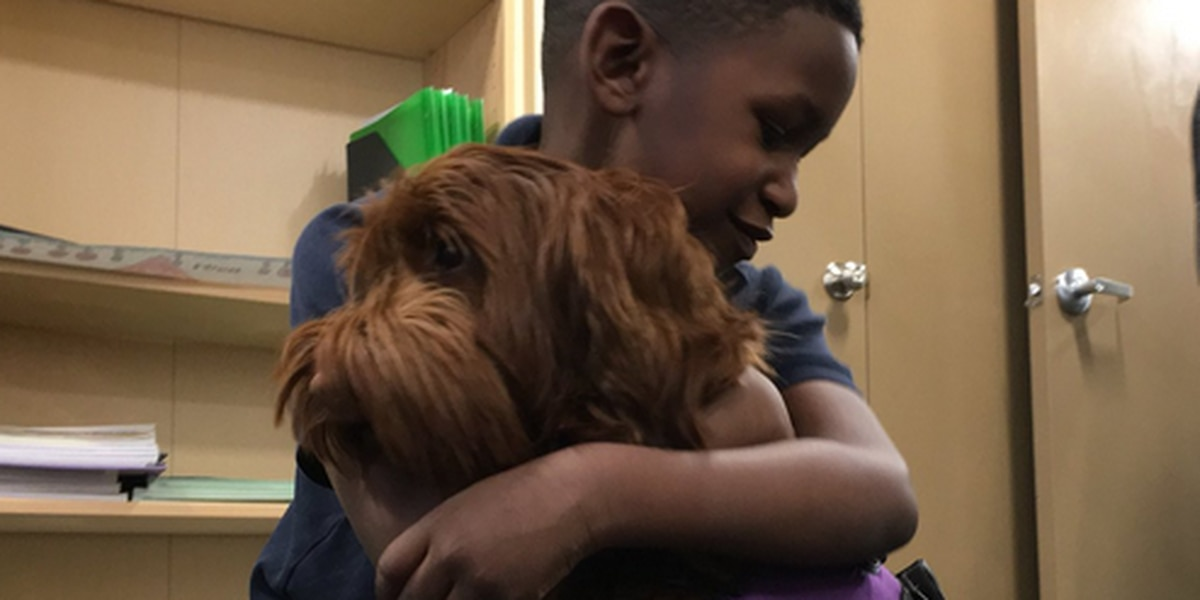 Power to the pooch: Akron school enlists therapy dog to boost learning