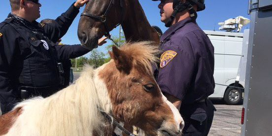 Cleveland Police Mounted Unit find missing pony