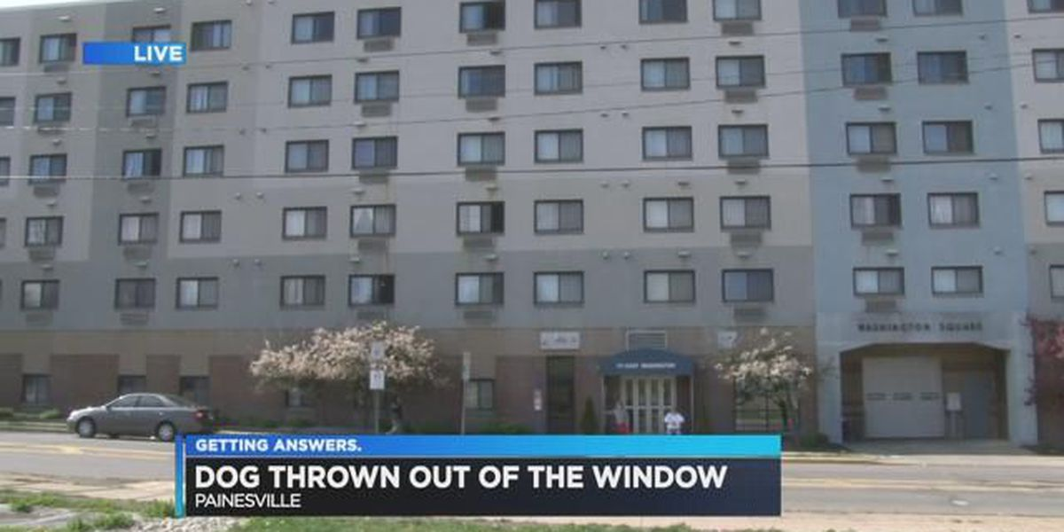 Man arrested, outrage grows over dog thrown out sixth-story window