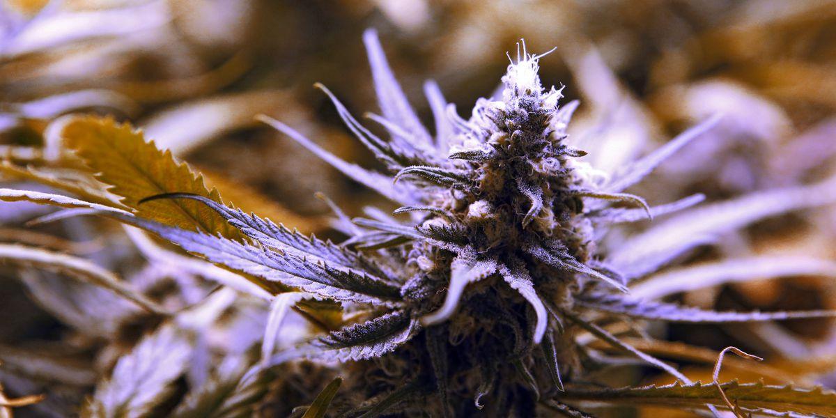 Ohio regulators issue recall for 2 medical marijuana strains due to improper testing