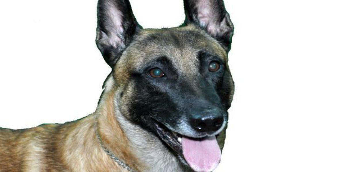 Lakewood K-9 officer succumbs to illness