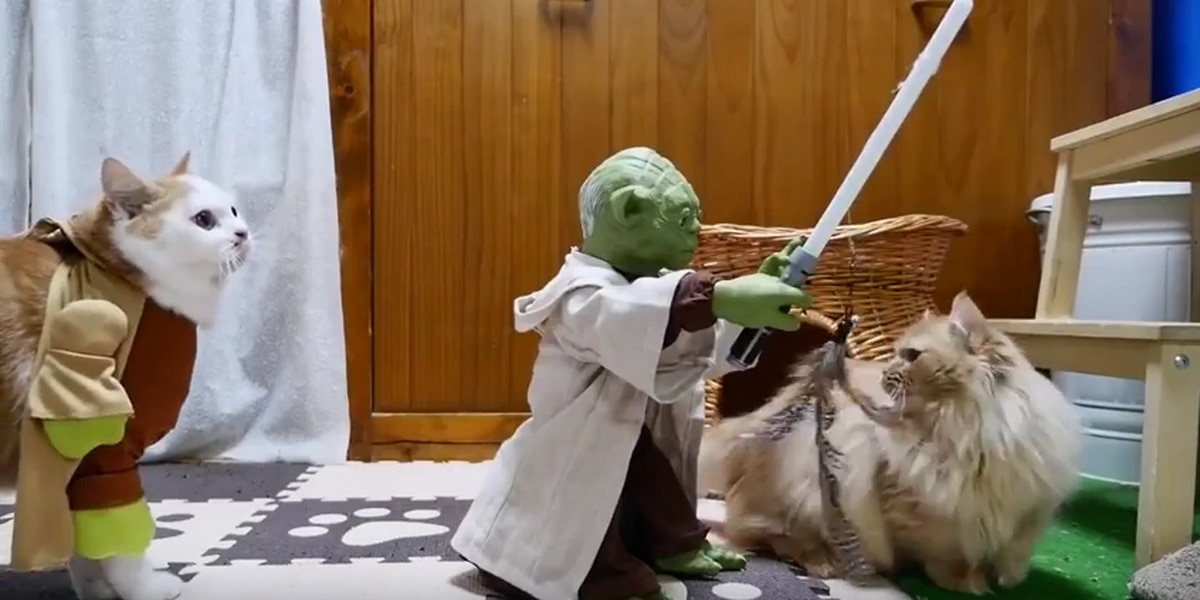 TRENDING: Cats take on Yoda and his light saber