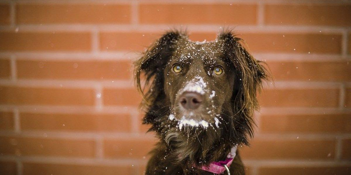 Ohio law protects pets from winter weather