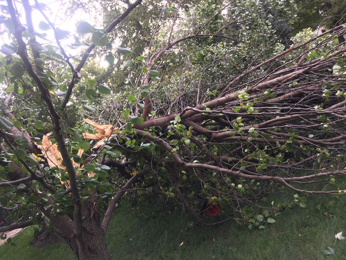 Severe thunderstorms down trees and over 30 wires in Cleveland, throughout Northeast Ohio