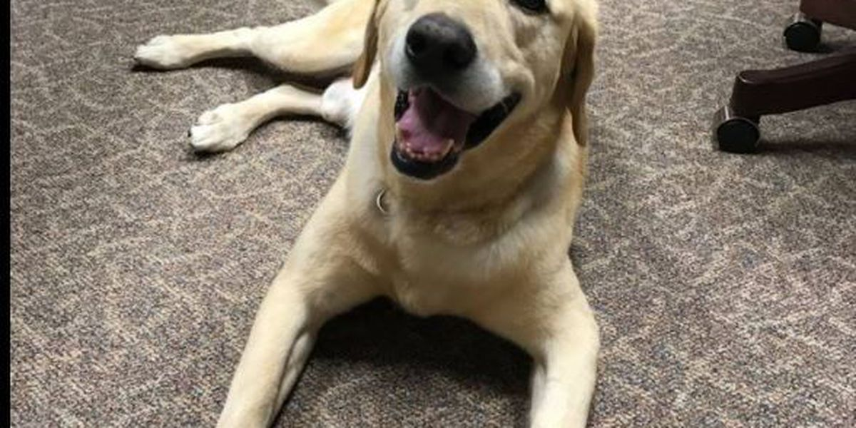School district excited about new therapy dog