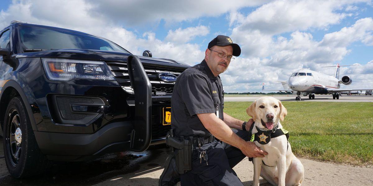 Summit County explosives detector K9 Deputy Anna dies at 7 due to illness
