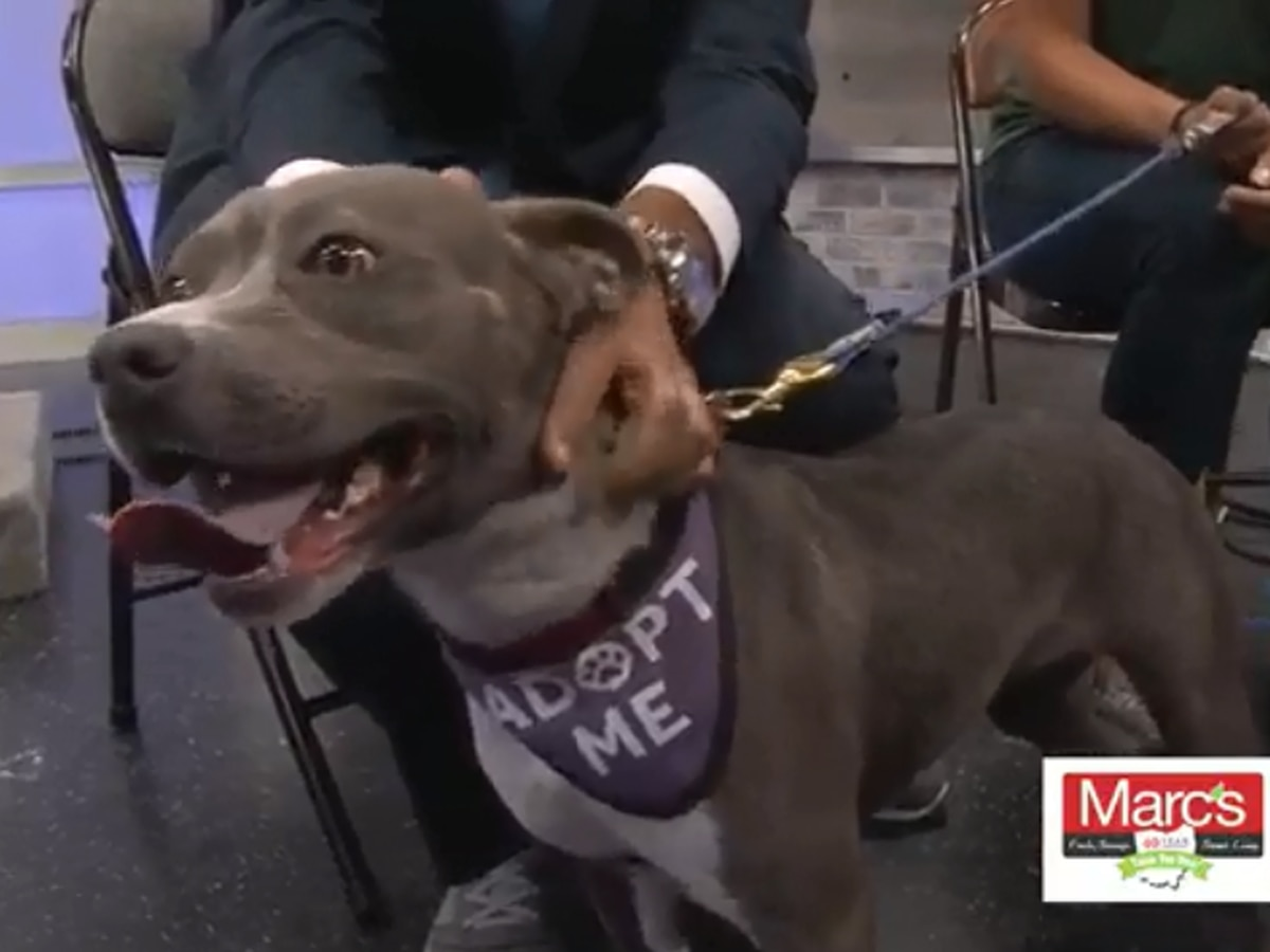 Cleveland APL Pet of the Week: Perhaps the happiest dog ever wants a Furever Home