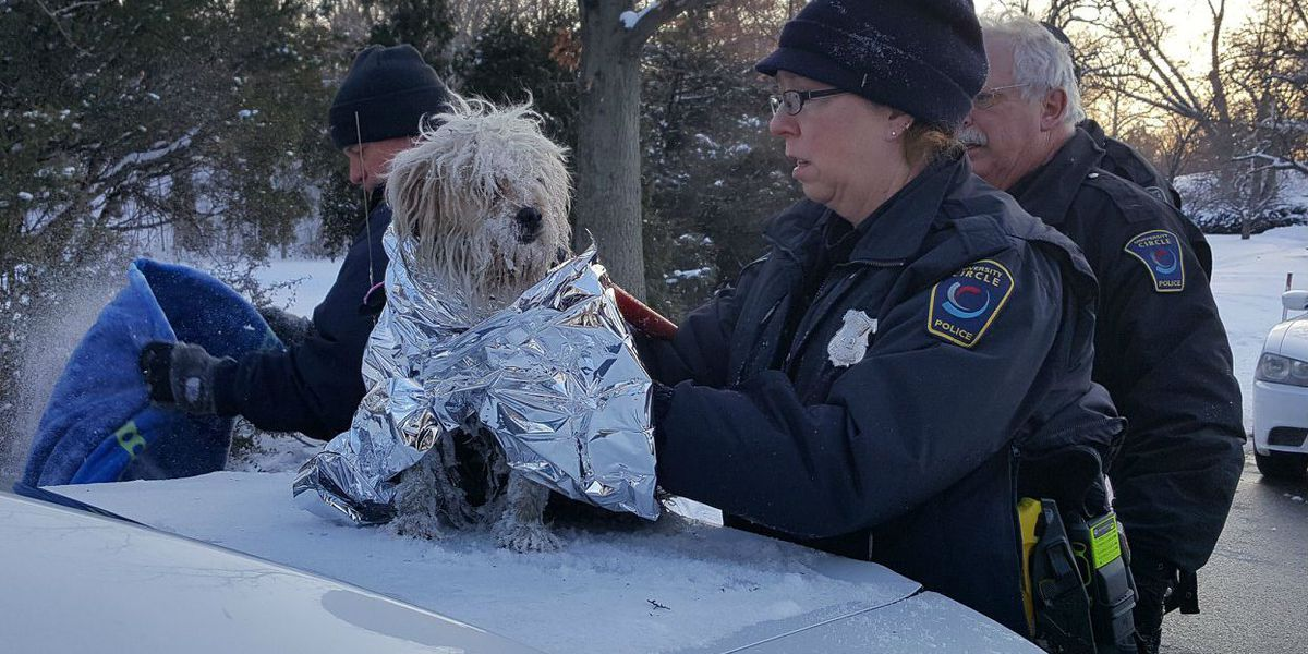 Dog rescued from icy University Circle pond