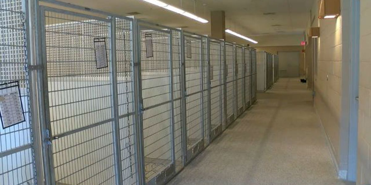 Summit County kennel celebrates empty cages
