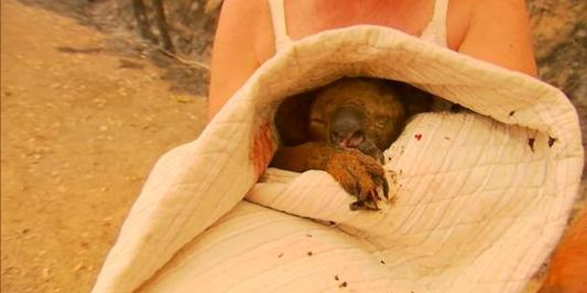 Woman saves koala from bushfires