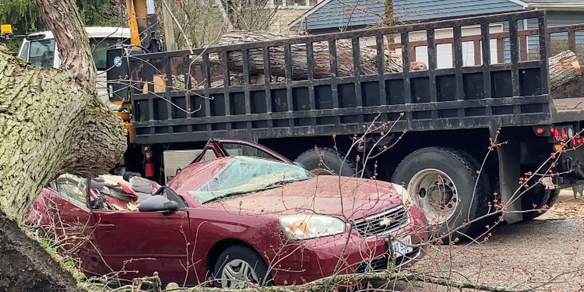 Wind downs trees and totals car on Cleveland's West Side